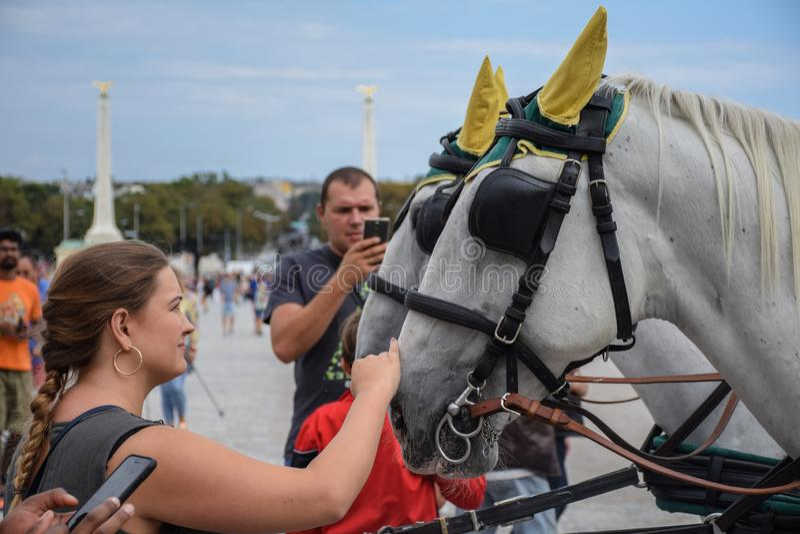 Vienna, Austria, settembre, 15, del 2019 - nTourist che prende le immagini e che accarezza i cavalli di nCarriage nello Schonbrun fotografia stock libera da diritti
