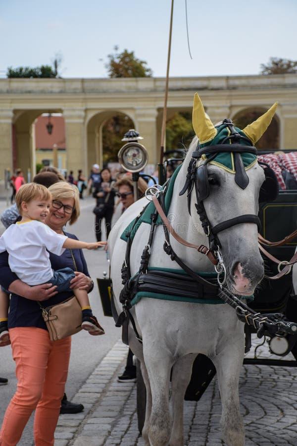 Vienna, Austria, settembre, 15, del 2019 - nTourist che prende le immagini e che accarezza i cavalli di nCarriage nello Schonbrun immagine stock