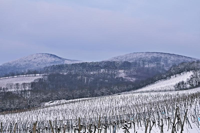 Vienna vineyards in winter royalty free stock photography