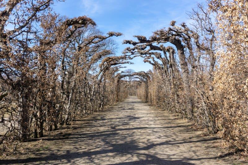 Vienne, Autriche - février 2019 : Belle vue de route en parc de Schonbrunn images libres de droits