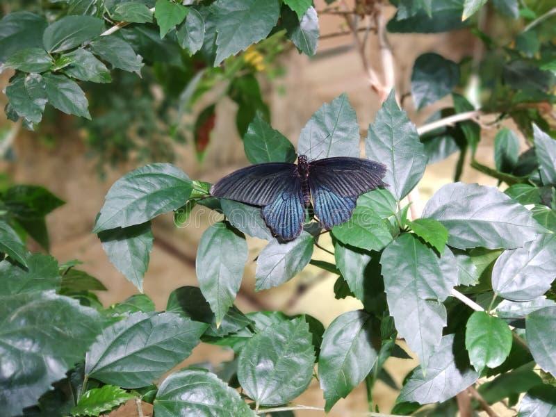 Vienne, Autriche - 25 février 2019 : Papillon au zoo de Vienne Schonbrunn photographie stock