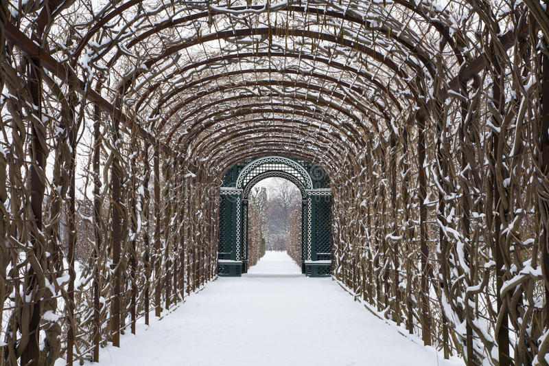 Vienne - busch de roses des jardins de Schonbrunn en hiver photo libre de droits
