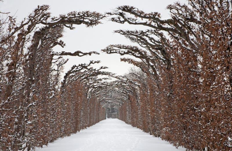 Vienne - frontière de sécurité sous tension des jardins de Schonbrunn en hiver photographie stock libre de droits