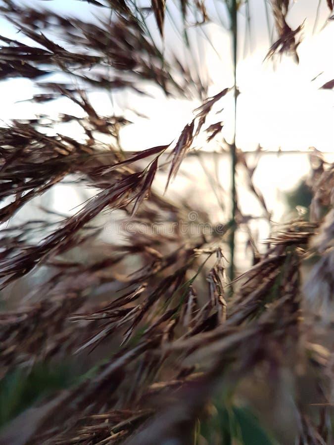 viento imagen de archivo