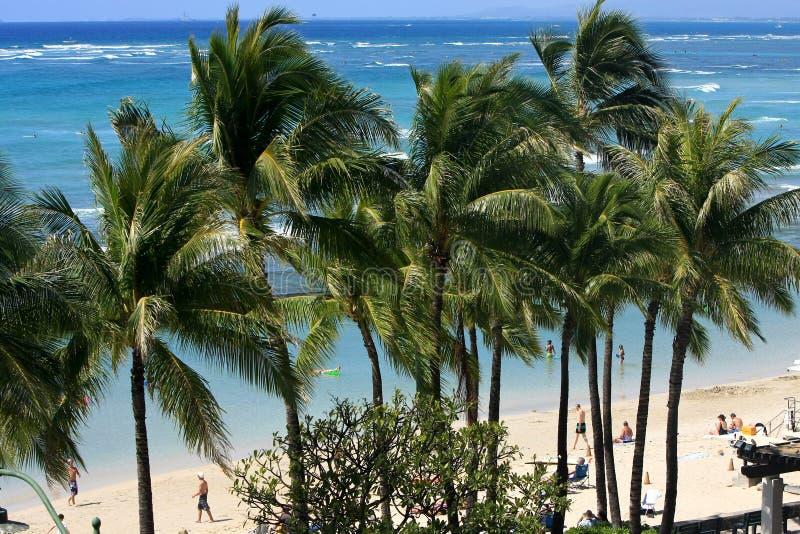 Viento en el tress de la palma en Waikiki. imagen de archivo