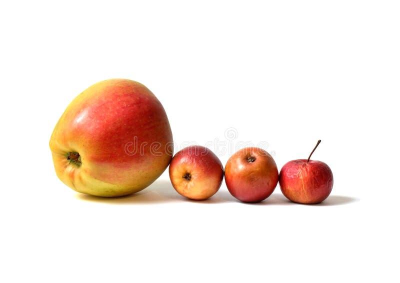 Vier Äpfel lizenzfreies stockbild