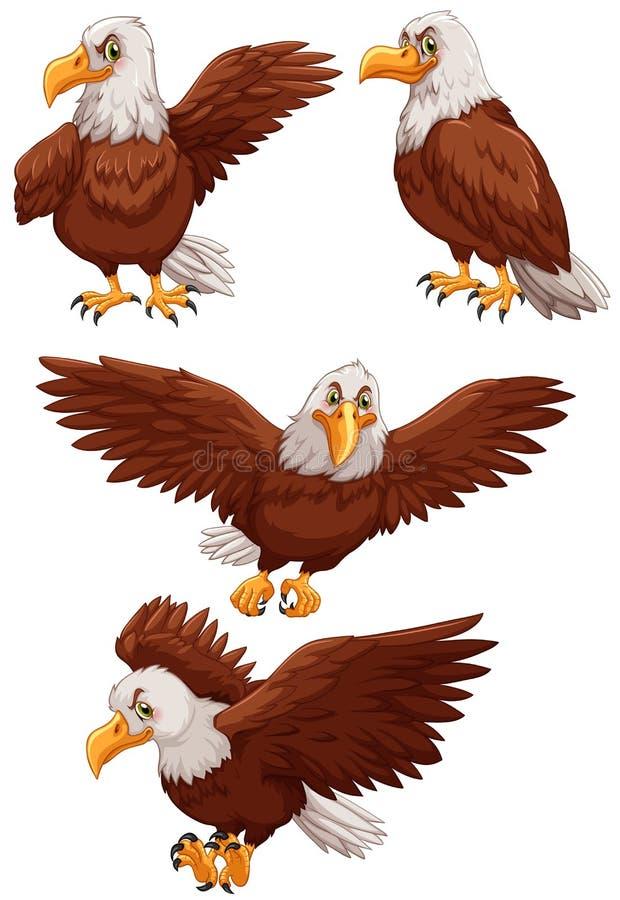 Vier Adler in den verschiedenen Aktionen stock abbildung