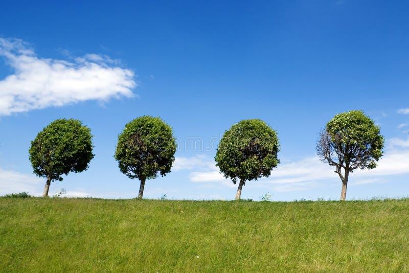 Vier Bäume stockfotos