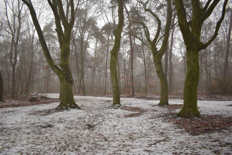 Vier Bäume in einem schneebedeckten Wald lizenzfreie stockfotografie