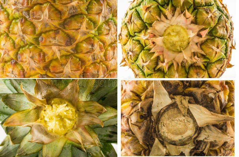 Vier Beschaffenheiten von verschiedenen Arten von Ananas ziehen - Spitzen-, unterer und Seitenansicht ab lizenzfreies stockbild