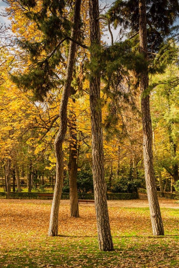 Vier bomen in de herfst in een park royalty-vrije stock fotografie