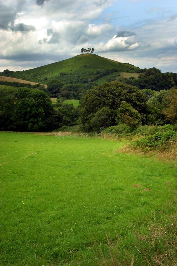Vier bomen op een heuvel 2