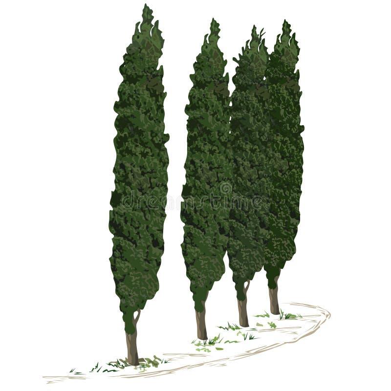 Vier bomen van een cipres en een voetpad langs hen stock illustratie