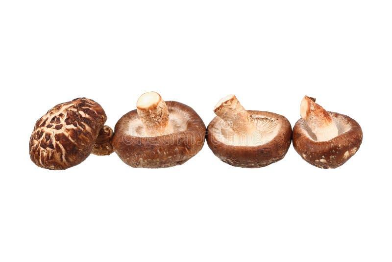 vier die shiitakepaddestoelen op wit worden geïsoleerd royalty-vrije stock foto's