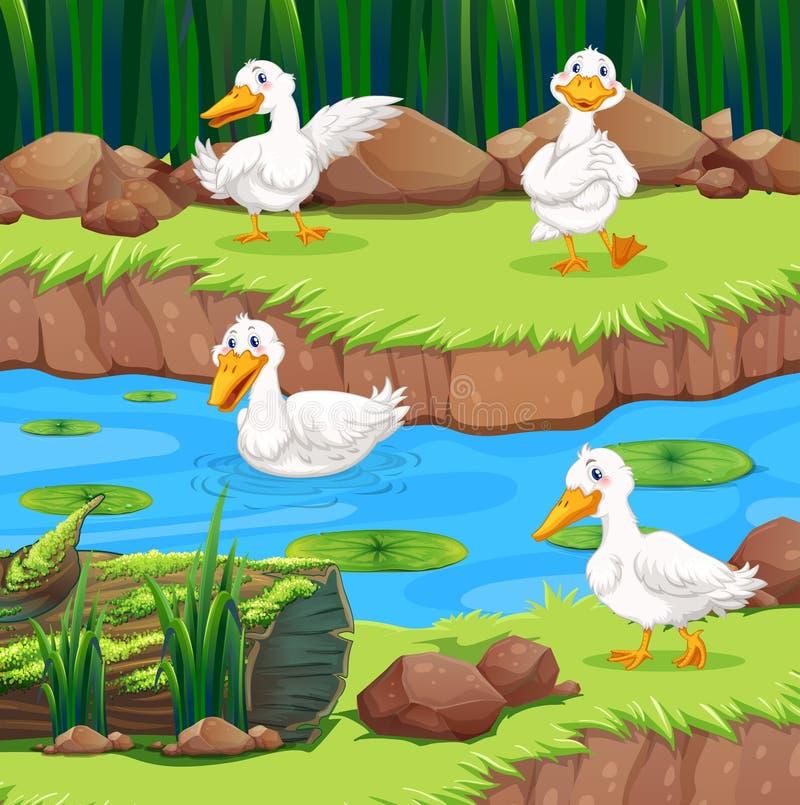 Vier eenden in de rivier vector illustratie