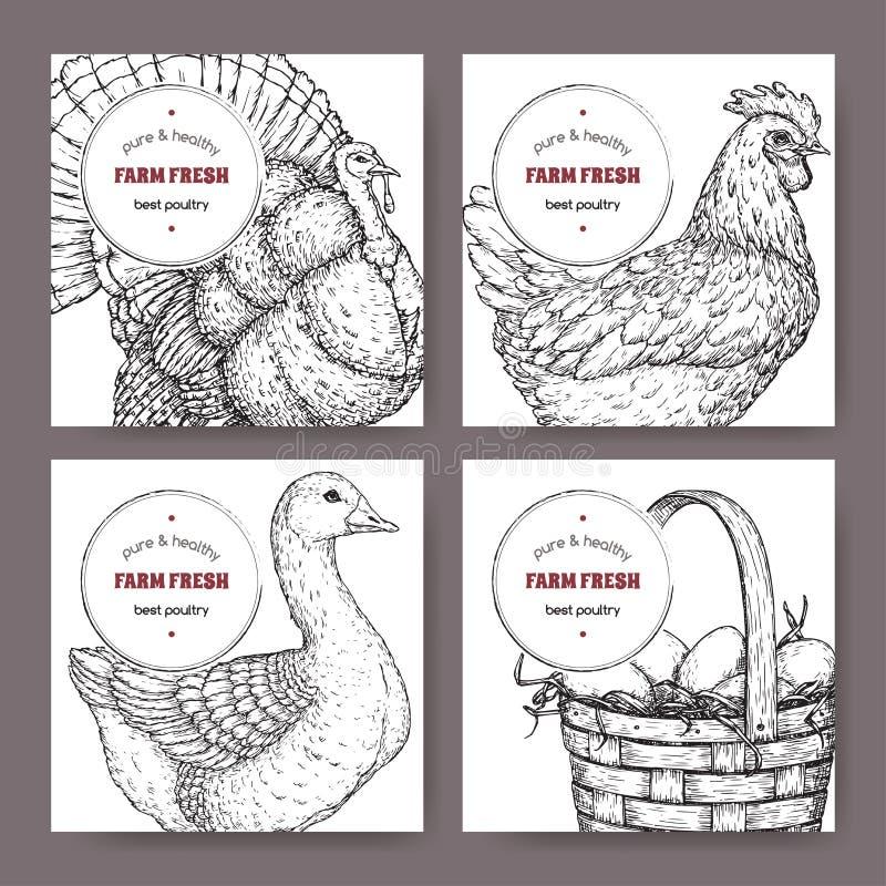 Vier etiketten met hand getrokken gevogelteschetsen vector illustratie