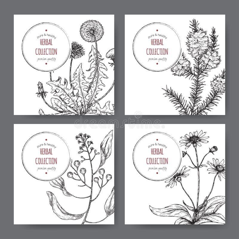 Vier etiketten met kamferlaurier, paardebloem, theeboom en valkruidschets Groene apothekerreeks vector illustratie