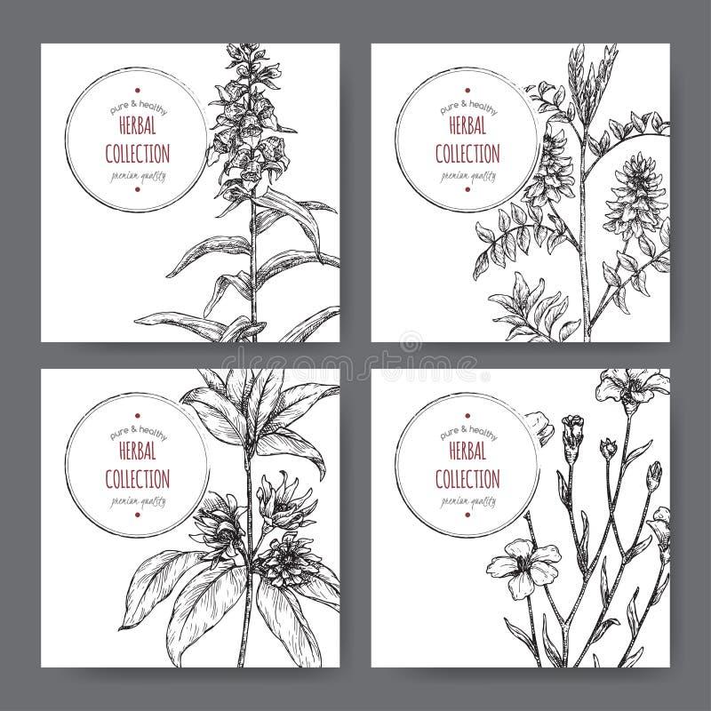 Vier etiketten met steranijsplant of badiane, zoethout, Vingerhoedskruid en gemeenschappelijke vlasschets royalty-vrije illustratie