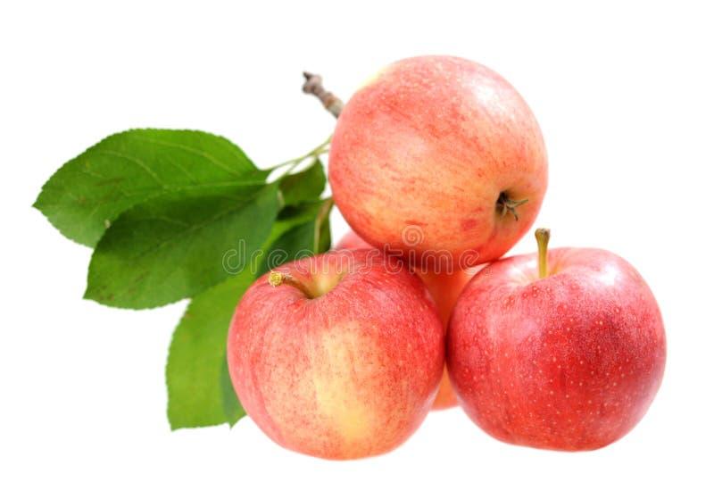 Vier frische Äpfel lizenzfreie stockfotografie