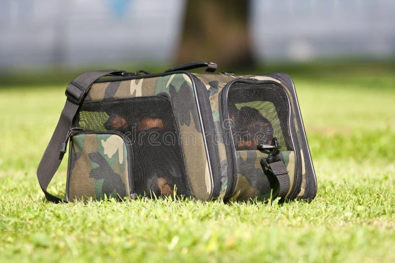 Vier honden in een dragende zak royalty-vrije stock afbeeldingen
