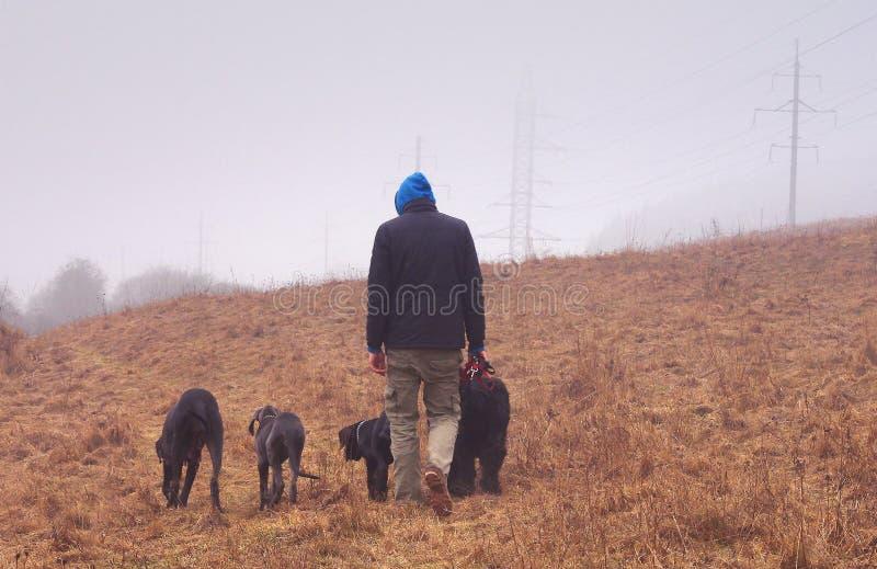 Vier honden met een mens stock fotografie