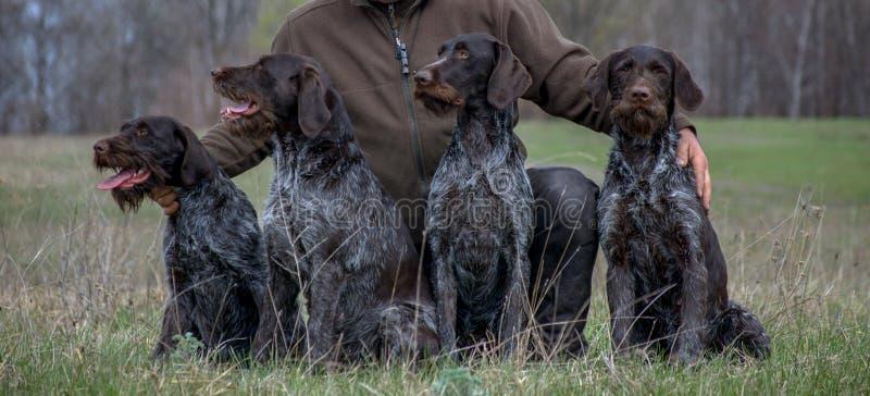 Vier Hunde und Mann, die in der Wiese sitzen lizenzfreie stockfotografie