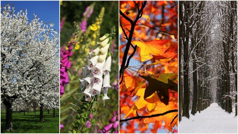 Vier Jahreszeiten stockbilder