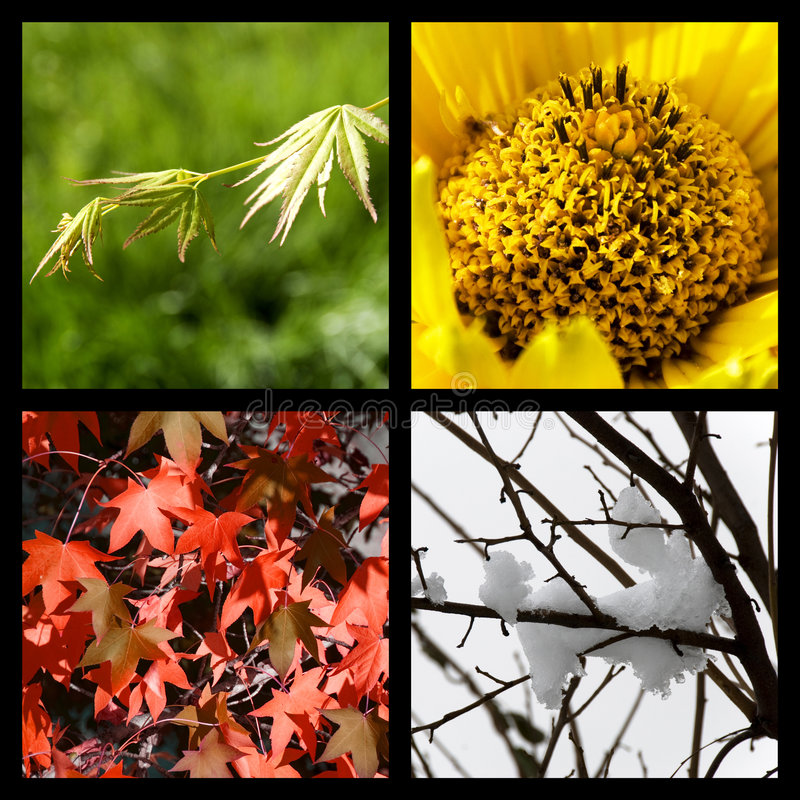 Vier Jahreszeiten in der Natur stockfotos