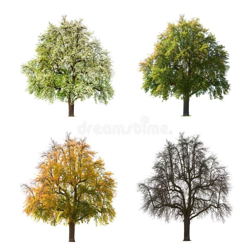 Vier Jahreszeiten des Baums stock abbildung