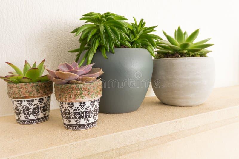 Vier Kaktuspflanzen in den Töpfen auf einem Regal lizenzfreie stockfotos