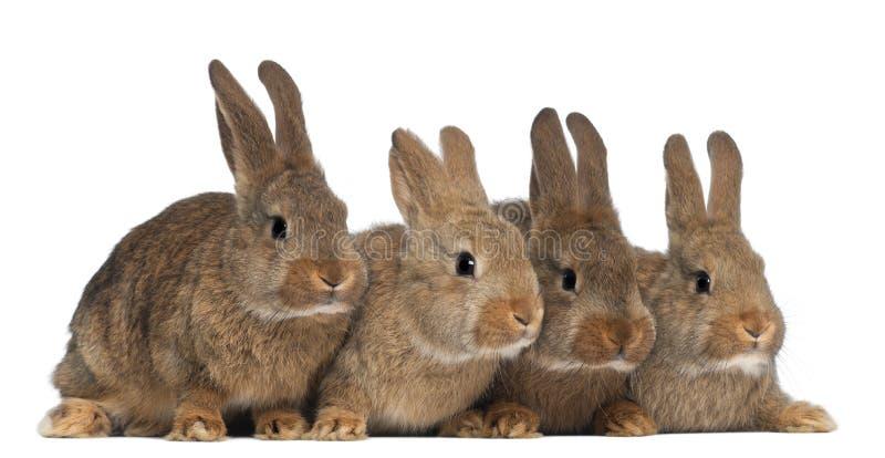 Vier Kaninchen lizenzfreie stockfotos