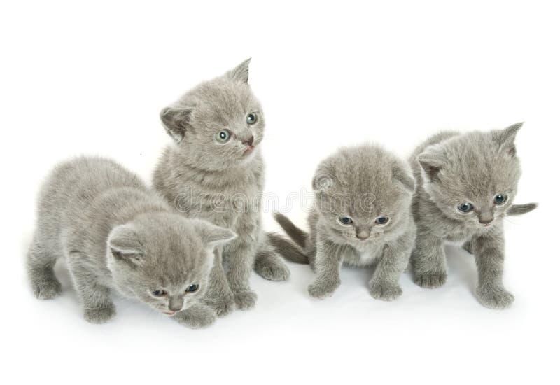 Vier katjes over wit royalty-vrije stock afbeelding
