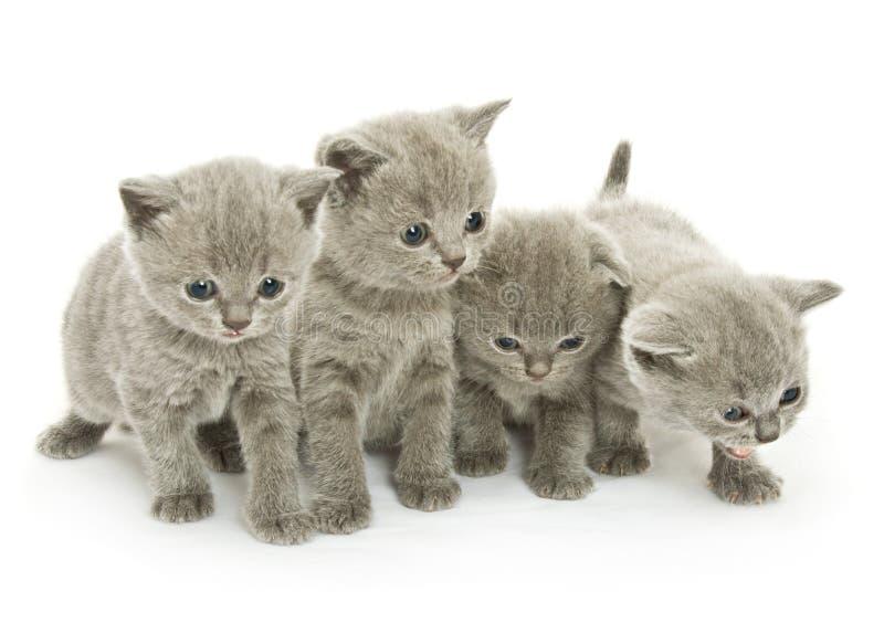 Vier katjes over wit stock foto's