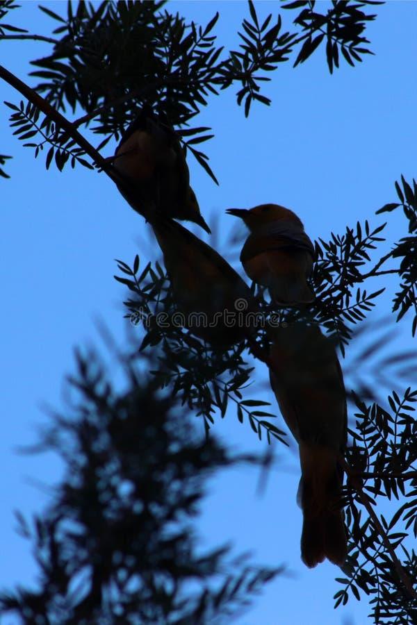 Vier kleine Vögel auf Schattenbild an König Canyon, Outhback-Australier lizenzfreie stockbilder
