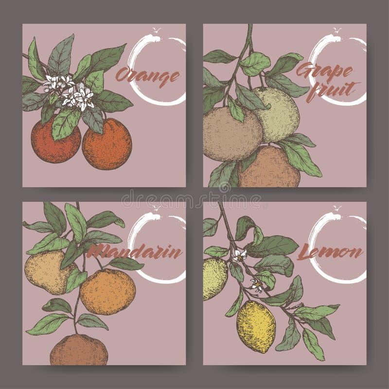 Vier kleurenetiketten met sinaasappel, citroen, mandarin en grapefruitschets royalty-vrije illustratie