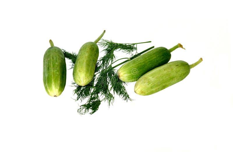 Vier komkommers en venkel stock afbeelding