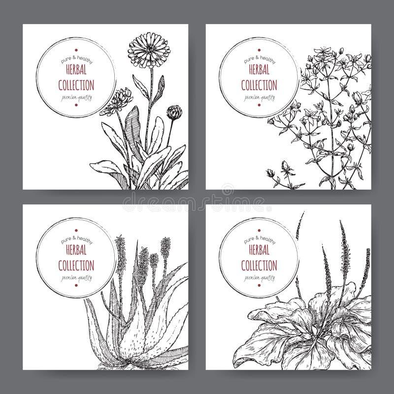 Vier Kräuteraufkleber mit Calendula, Würze Johannes, Aloe, Plantago stock abbildung