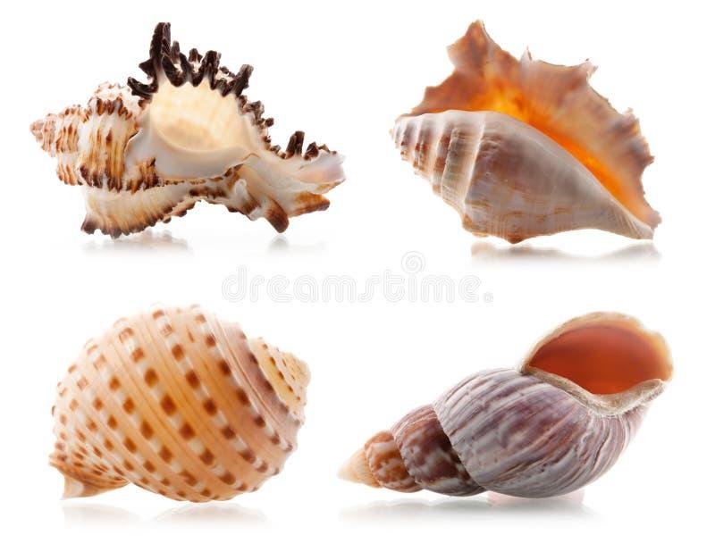 Vier overzeese shells stock foto's
