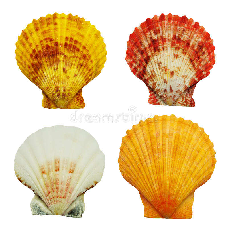 Vier overzeese shells royalty-vrije stock afbeelding