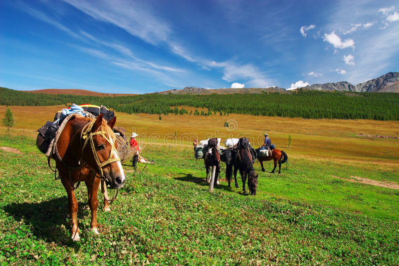 Vier paarden, twee mens, meisje en bergen. royalty-vrije stock foto's
