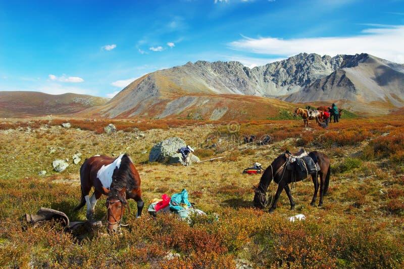 Vier paarden, twee mensen, meisje en bergen. royalty-vrije stock foto