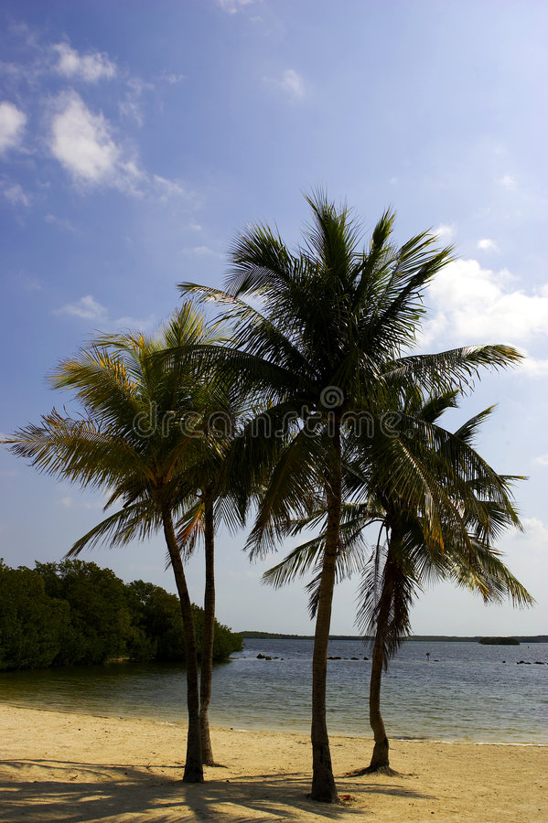 Vier Palmen auf einem Strand stockbilder
