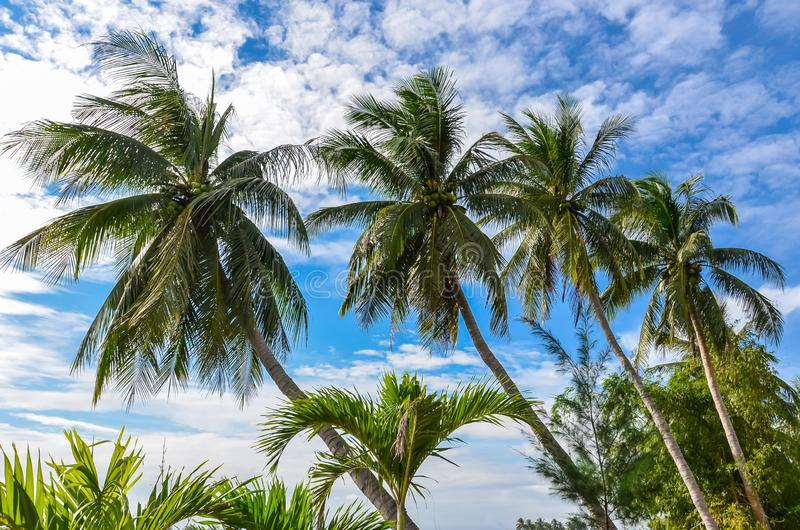 Vier Palmen op Blauwe Hemel stock foto's