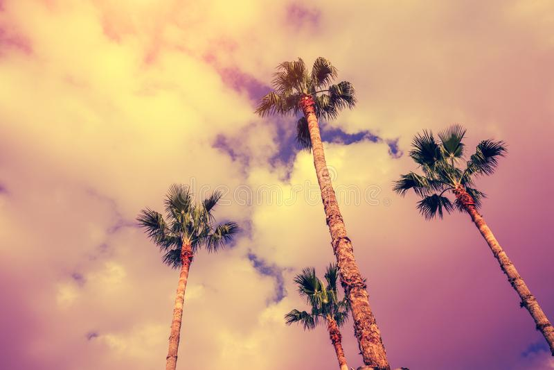 Vier palmen tegen de zonsonderganghemel royalty-vrije stock fotografie