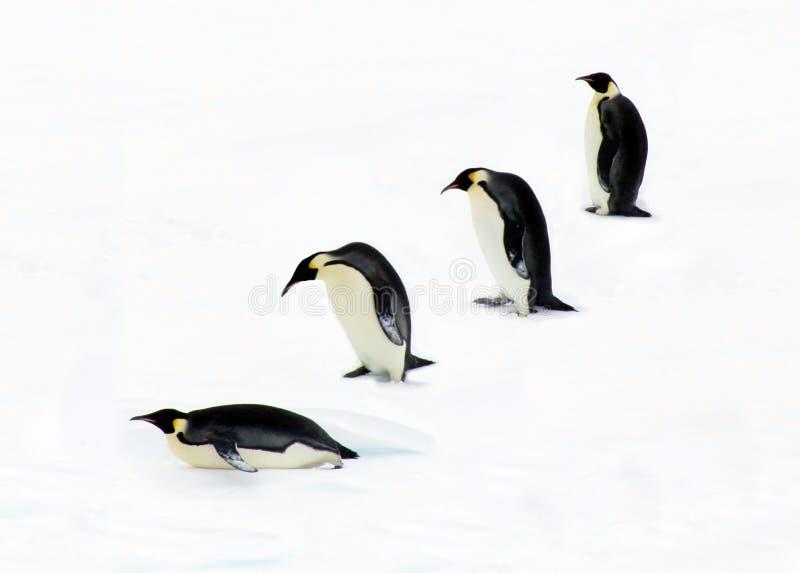 Vier Pinguine lizenzfreie stockfotos