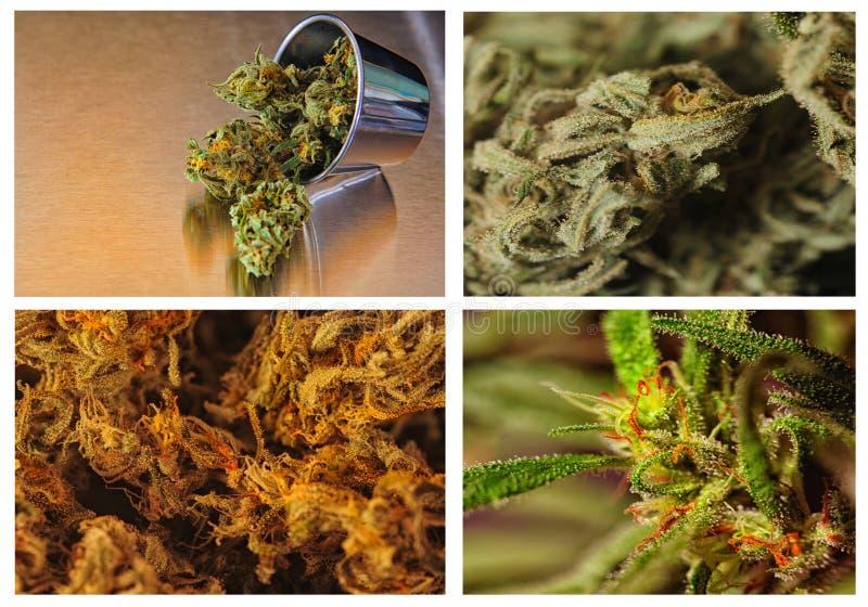 Vier rangen van marijuania royalty-vrije stock afbeeldingen