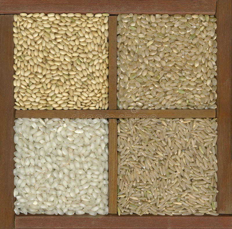 Vier Reiskörner in einem Kasten mit Teilern lizenzfreies stockfoto