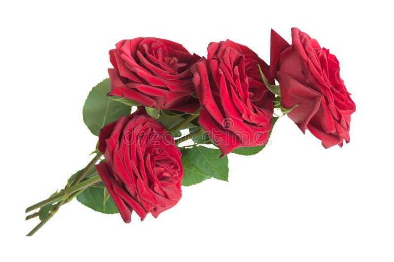 Vier rode die rozen op witte achtergrond worden geïsoleerd royalty-vrije stock foto