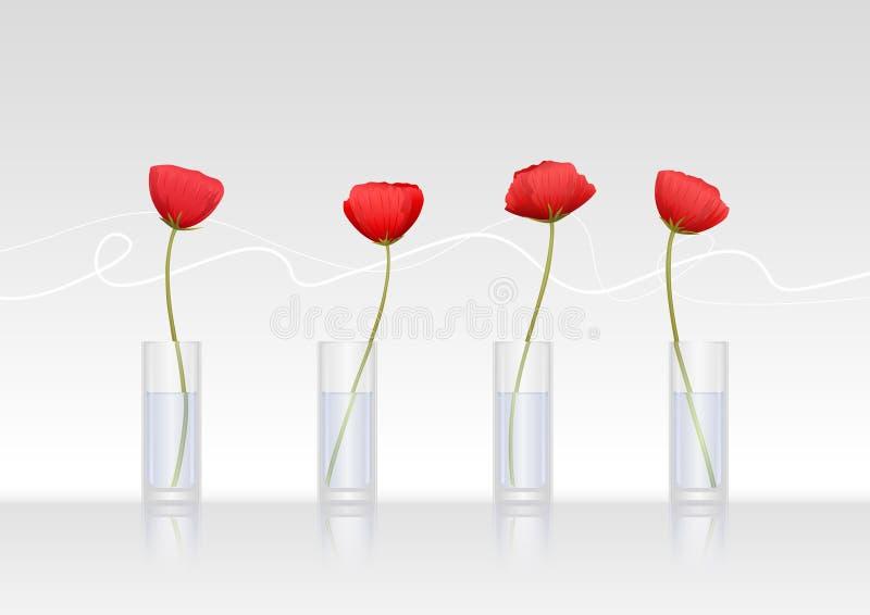 Vier rode papaver-bloemen in glasvazen stock illustratie