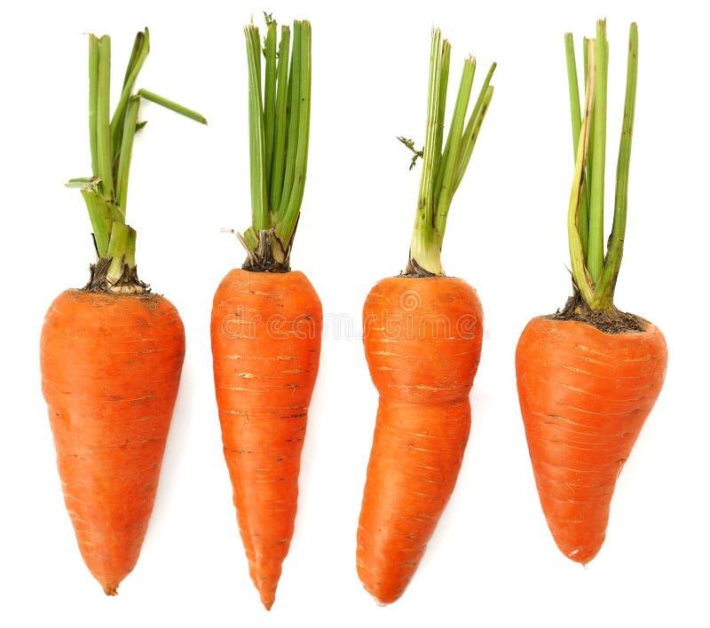 Vier rohe ganze organische unvollständige orange Karotten lokalisiert lizenzfreies stockfoto